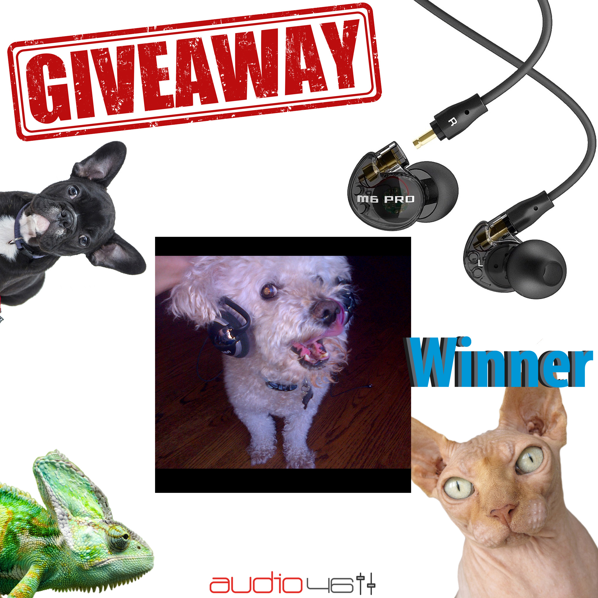 Pets With Headphones Photo Contest Winner